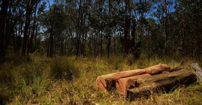 Mulgoa Logs 3 (c) Wildside Au