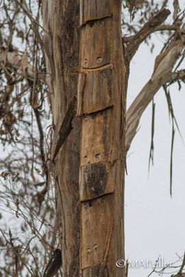 Wallaroo Habitat hollows